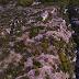 Βραδέτο ...Ζαγοροχώρια :Μοναδικό Οδοιπορικό ...στο χωριό που ξεπροβάλλει  απο τα απότομα βράχια [βίντεο]