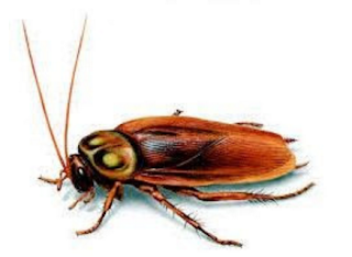 <a href='http://www.dreamingofcockroacheshq.xyz' title='spiritual meaning of cockroaches in dreams' target='_blank'>spiritual meaning of cockroaches in dreams</a>