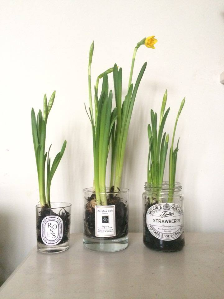 Spring Bulbs In Old Jars Roses And Rolltops