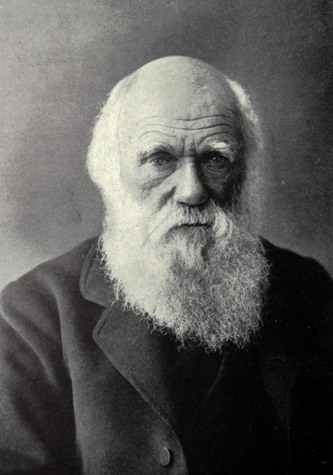 تشارلز داروين، نظرية الانتخاب الطبيعي Charles Robert Darwin