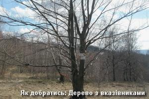 Дерево перед каньйоном Ключа