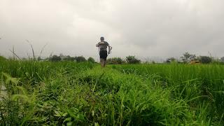 從草叢仰看人類的視野