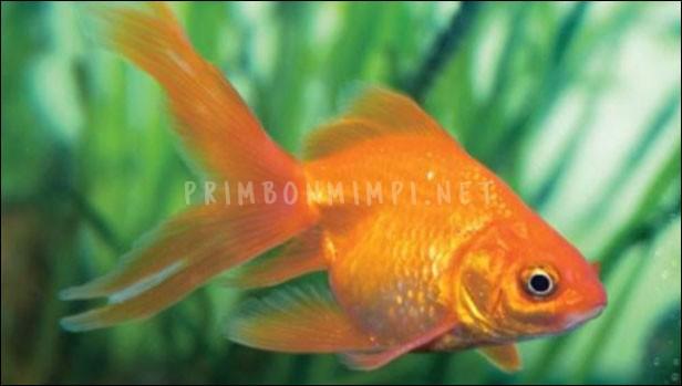 Mimpi Melihat Ikan
