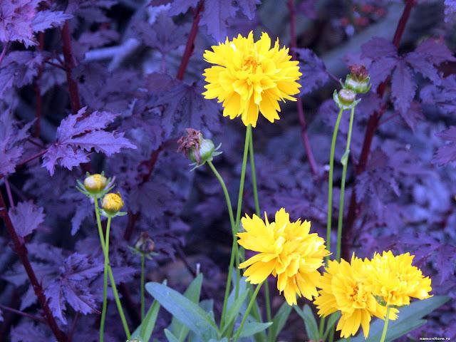 fonds d'écrans fleurs printemps