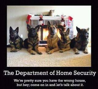 dog as protectors