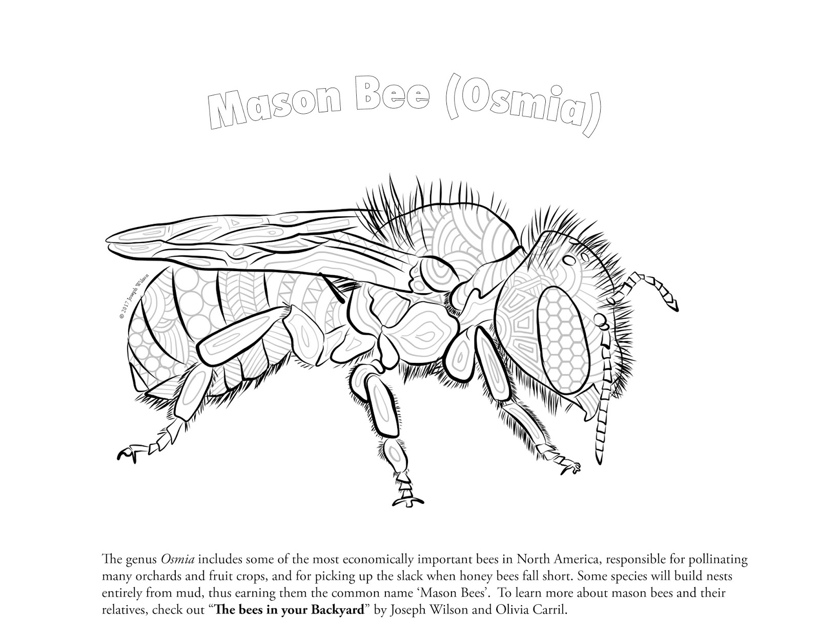 Bees in your backyard: Native Bee coloring page