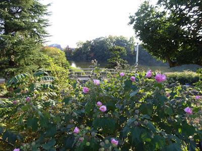 秋の市民の森(鏡伝池緑地) フヨウ
