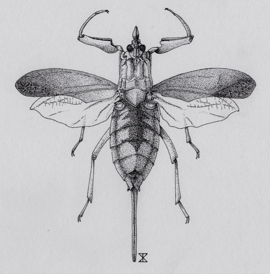 NATUURTEKENINGEN: Insecten tekenen in Nederland