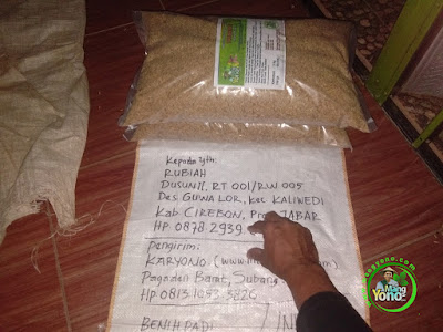 Benih Padi TRISAKTI Pesanan   RUBIAH Cirebon, Jabar  (Sebelum di Packing)