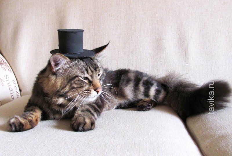 одежда для кота своими руками
