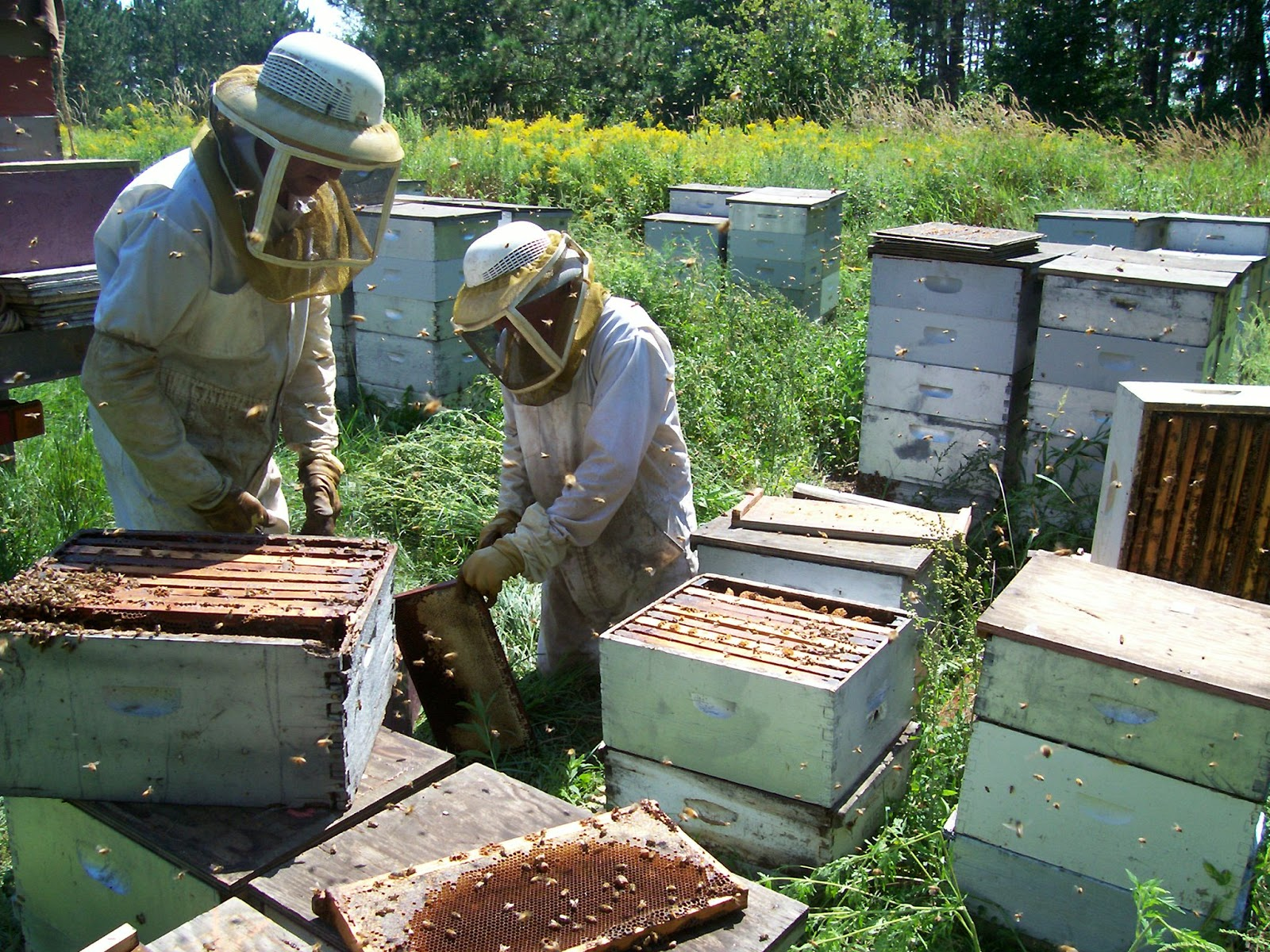 The Commercial Beekeeper Often Cannot Dink Around Too Much And Save All Problem Hives They Probably Wont Make A Honey Harvest Anyways
