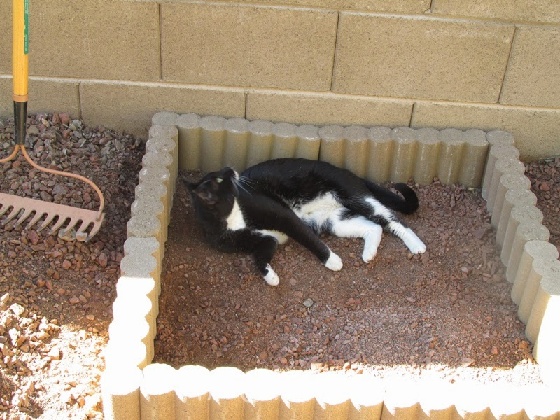 Tutorial Outdoor Cat Litter Box The Chilly Dog