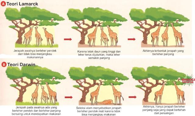 Teori Darwin dan Lamarck
