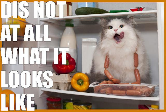 cat in the fridge
