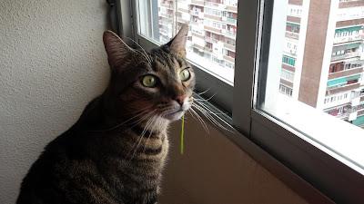 Gato con hierba