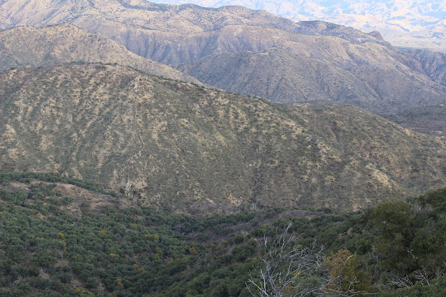Guided%2BCoues%2BDeer%2BHunts%2Bin%2BSonora%2BMexico%2Bwith%2BJay%2BScott%2Band%2BDarr%2BColburn%2BDIY%2Band%2BFully%2BOutfitted%2B17.JPG