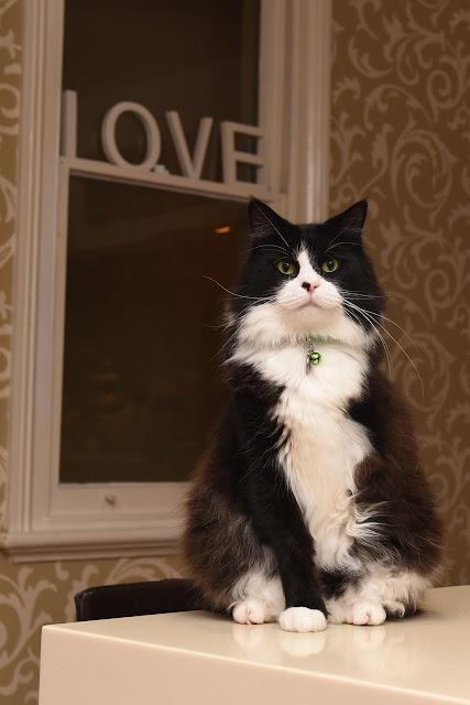 cat, love