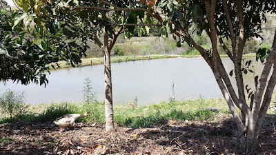 lago no camping