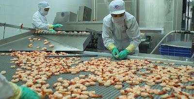 Tuyển 15 lao động chế biến tôm tại Nhật Bản