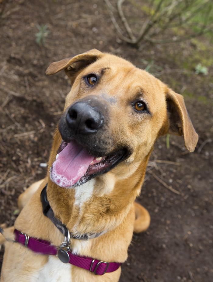 Shelter Dogs of Portland: \u0026quot;ROSCOE\u0026quot; long legged Runner\u0026#39;s ...