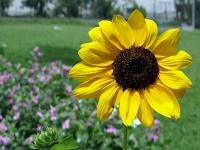 Bisnis Bunga Hias Prospek Untung Berlipat Ganda