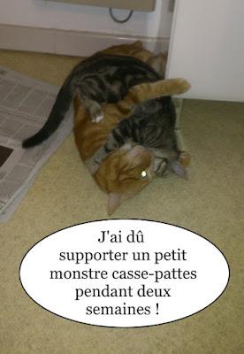 Lionel, le chat le plus malheureux du monde.