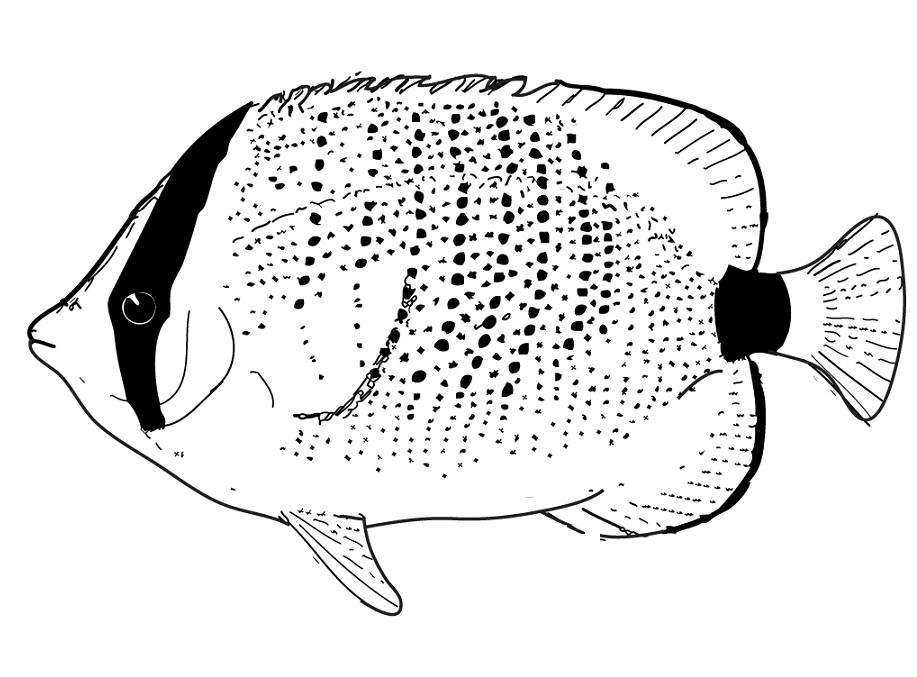 gambar gambar mewarnai laut lucu hewan di rebanas