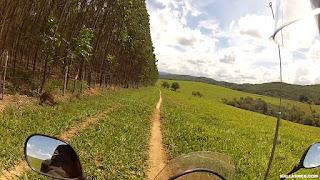 Floresta de eucaliptos ao lado da trilha.