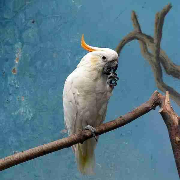 Keanekaragaman Burung Yang Ada Di Bumi: Jenis-Jenis Kakaktua