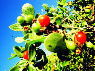 UNPLOG      : Fruit or