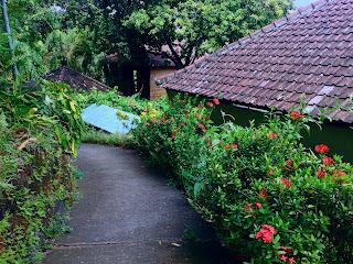 Ashoka Plant Along The Road Brahmavihara Arama