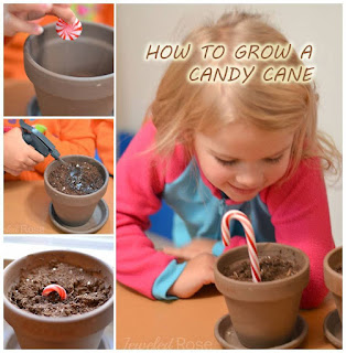 HOW TO GROW A CANDY CANE.  Christmas magic- this is too cool! #growacandycane #candycanecrafts #growacandycaneforkids #christmascraftsforkids #christmasactivitiesforkids #christmascrafts #howtogrowacandycane