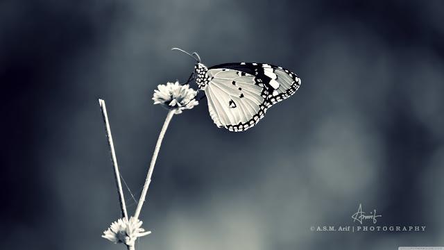 Kelebekler Hep Benimle