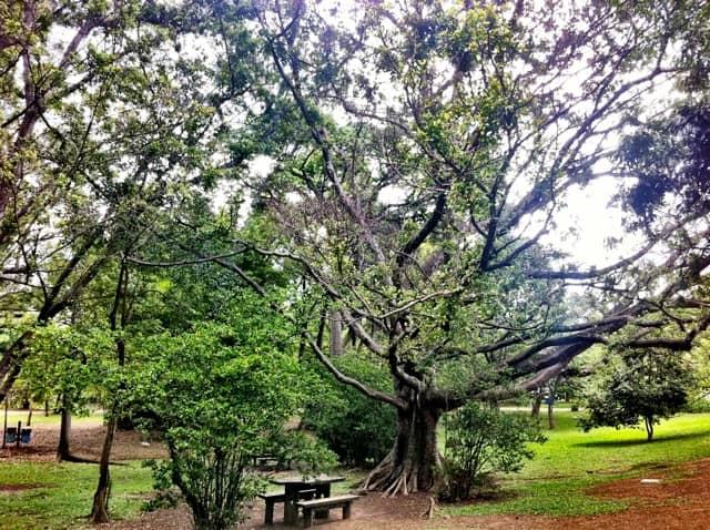 Parque Ibirapuera - Área para piquenique