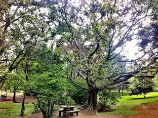 Parque do Ibirapuera - Área para piquenique