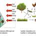 Penjelasan Tentang Interaksi Makhluk Hidup dengan Lingkungan