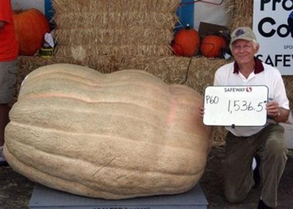 abóbora gigante