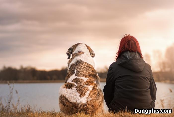 tâm sự với chú chó