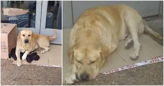 Σκύλος περιμένει για μέρες έξω από νοσοκομείο, αλλά ο ιδιοκτήτης του δυστυχώς έχει πεθάνει