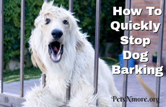 pets n more how to quickly stop dog barking