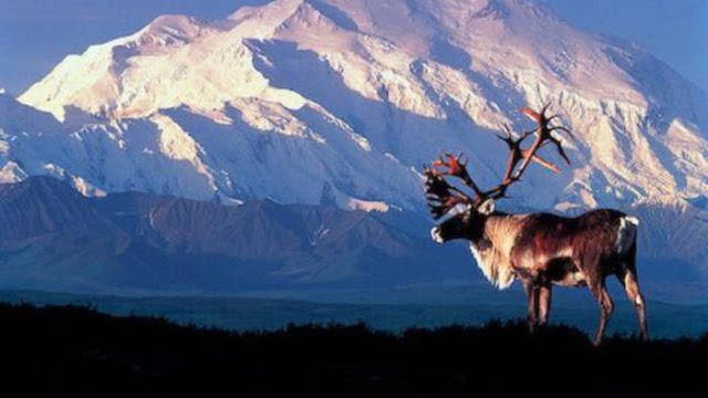 Mendaki Gunung McKinley