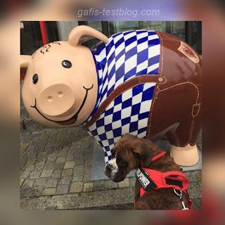 Amy und ein süßes Schweinchen