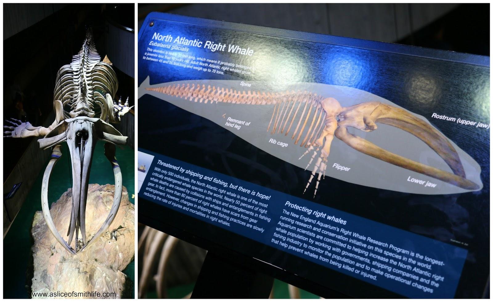 Image Result For Aquarium North Myrtle