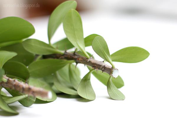 Aentschies Blog Urban Jungle Pflanzen Vermehren Durch Stecklinge