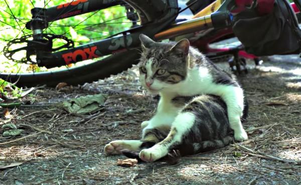 cat island bike