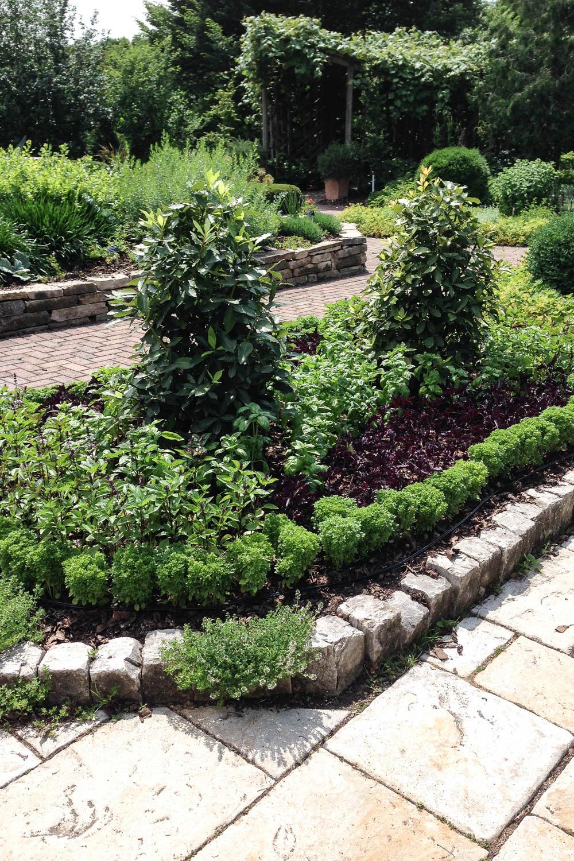 Herb Garden, Basil, Botanical Gardens, Public Gardens, Madison, Wisconsin