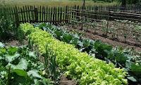 organic food, farming biodiversity