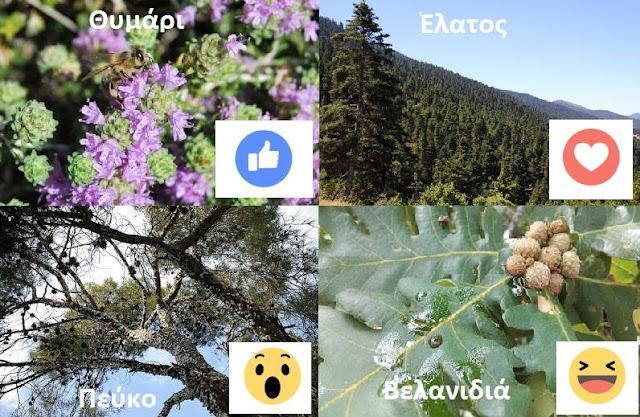 Το θυμαρίσιο μέλι προτιμούν οι Έλληνες μελισσοκόμοι