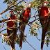 Exposição leva riquezas do Pantanal ao Reino Unido