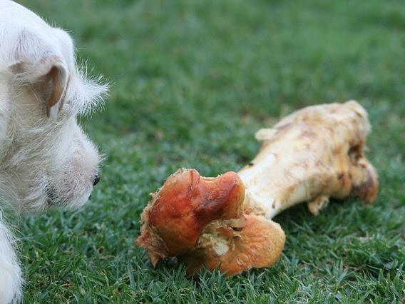 Bolehkah Memberi Tulang Pada Anjing Untuk Dimakan?